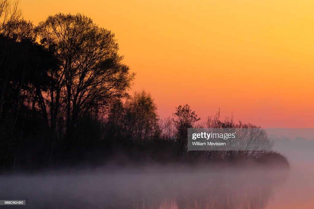 Foggy Sunrise 'Tree' : Stockfoto