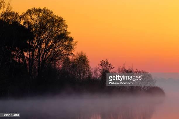 foggy sunrise 'tree' - william mevissen bildbanksfoton och bilder