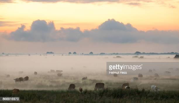 foggy sunset in National Park Vorpommersche Boddenlandschaft