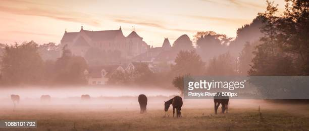 foggy sunset with a view of grazing horses - village photos et images de collection