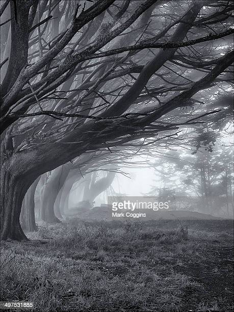 foggy trees - san bruno stock pictures, royalty-free photos & images