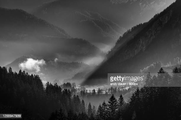 foggy valley in black and white - andy dauer stock pictures, royalty-free photos & images