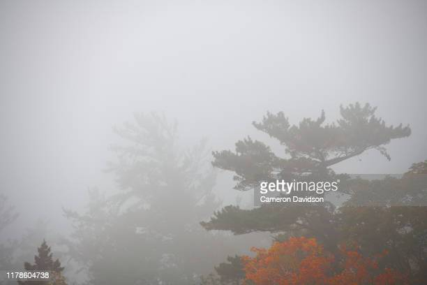 foggy view of lake superior - lake superior provincial park stock pictures, royalty-free photos & images