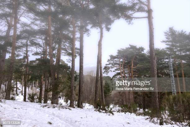 Foggy winter landscape in the forest, Cercedilla, Madrid, Spain.