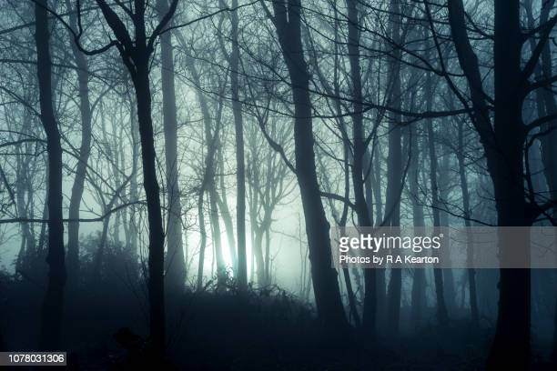 foggy winter morning in british woodland - spooky stock pictures, royalty-free photos & images