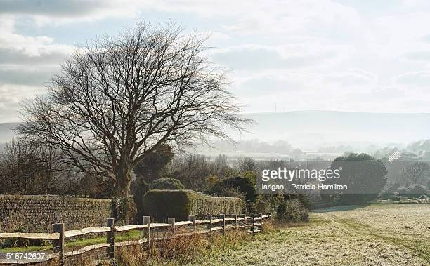 A foggy winter  morning in the countryside