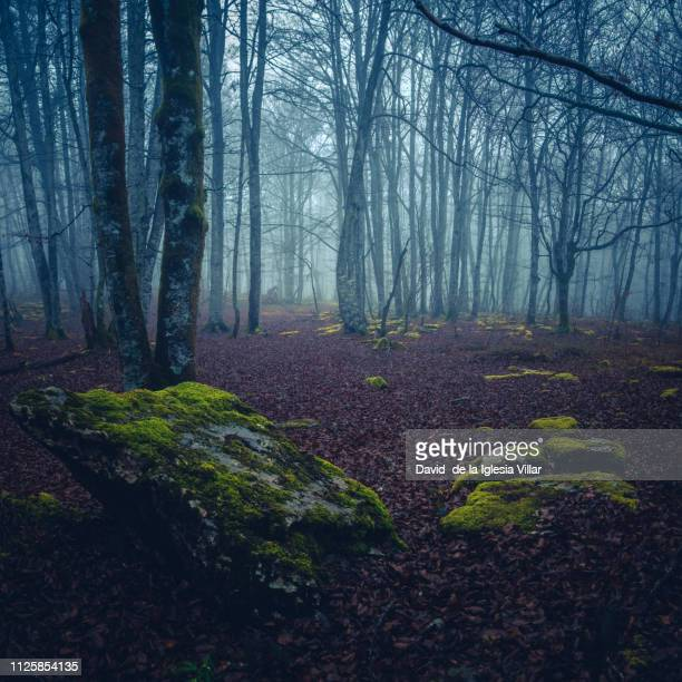 Foggy winter morning in the forest