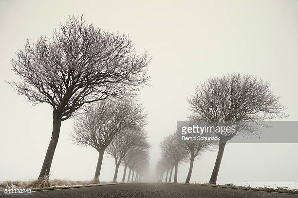 foggy winter road - bernd schunack stock photos and pictures