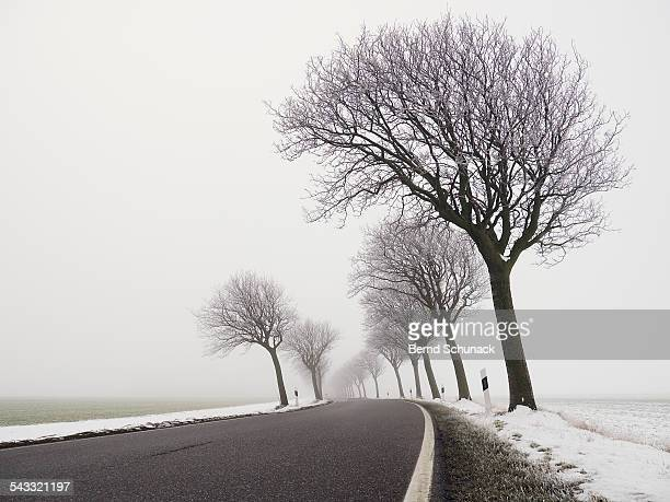 foggy winter road - bernd schunack foto e immagini stock