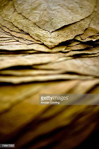 Folded tobacco leaves lie ready for transportation at a tobacco warehouse on June 18 2007 in Jember Indonesia Despite Indonesia's troubled and...