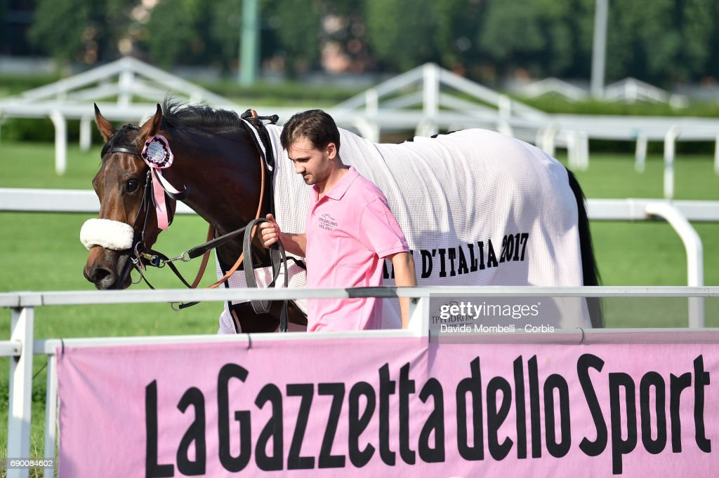 Folega, winner of the Oaks D'Italia Folega is walked by a groom during prize give cerimoni run at the San Siro Racecourse on May 28, 2017 in Milan, Italy.