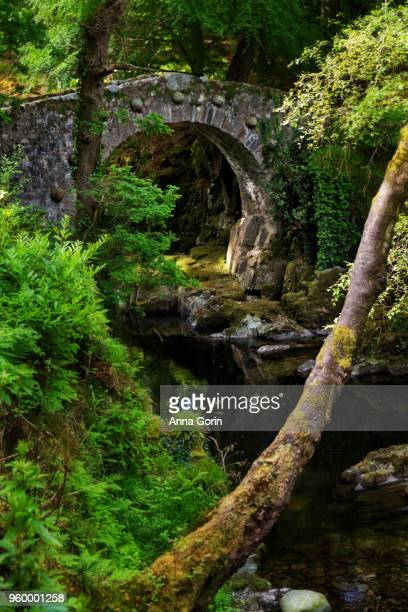 Foley's Bridge across Shimna River in Tollymore Forest Park, Northern Ireland