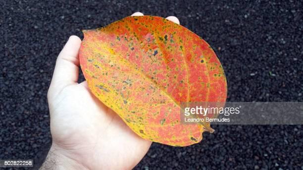 Folha em tom laranja sobre palma da mão