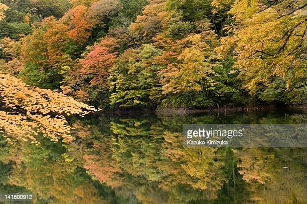 foliage at jyuniko - kazuko kimizuka stockfoto's en -beelden