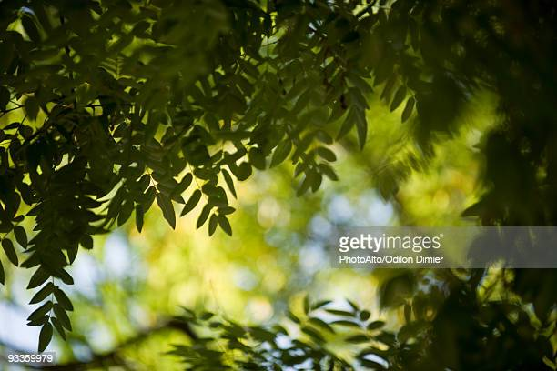 Foliage, backlit