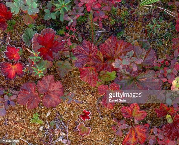 Foliage in Autumn Colors