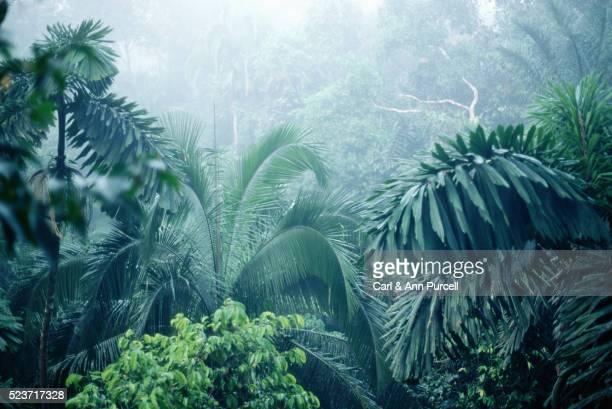 Foliage in Ecuadoran Rainforest