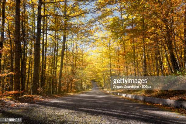 foliage in the national park - basilicata region stock pictures, royalty-free photos & images