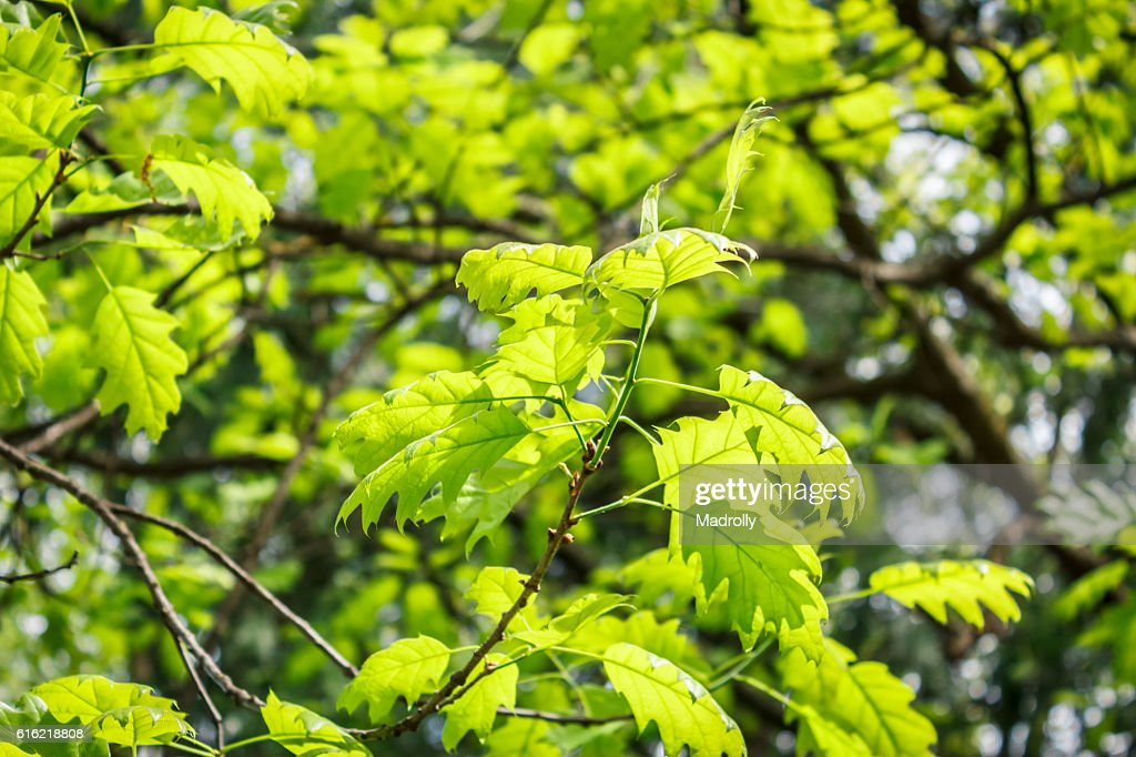 Foliage in the park : Stockfoto