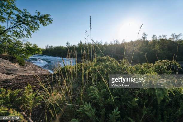 foliage near remote river - norrbotten province stock pictures, royalty-free photos & images