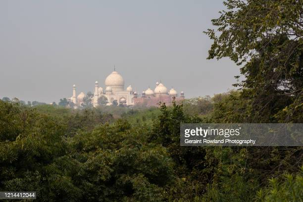 foliage & the taj mahal - celebrity death stock pictures, royalty-free photos & images