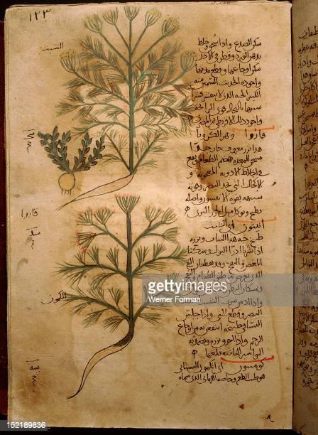 Folio 37r of the Arabic version of Dioscorides De Materia Medica Rosa sempervirens and Henna Islamic 987 990 Samarkand