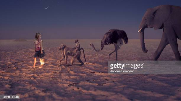 follow the light - ostrich stock pictures, royalty-free photos & images