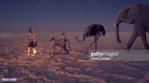 follow the light - ostrich stockfoto's en -beelden