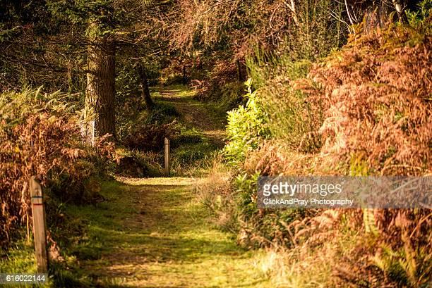 Follow The Sun-Dappled Path