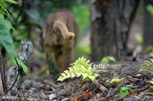 follow the tail - fossa stock photos and pictures