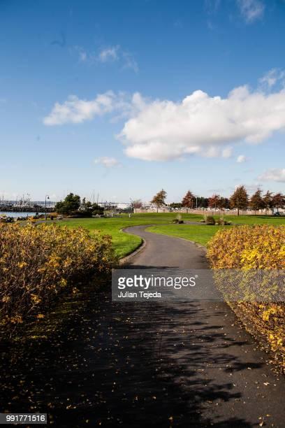 follow the yellow bushes? - tejeda fotografías e imágenes de stock