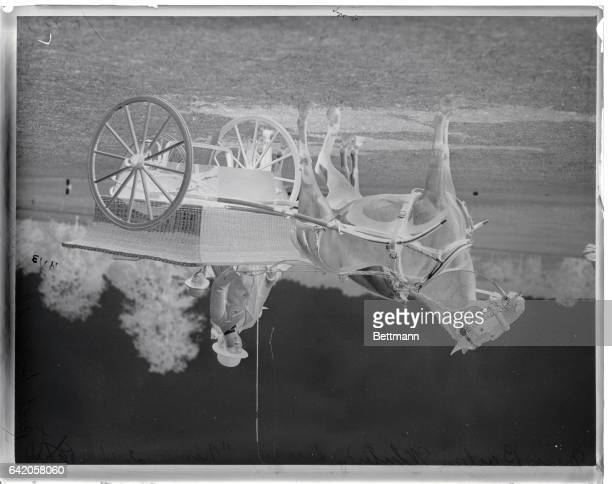 Following negatives made at the Piping Rock Horse Show at Locust Valley LI October 2 1914 Photo shows Miss Barbara Whitney driving Nemo