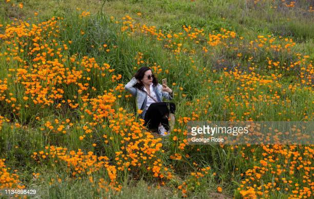 Following record winter rains the hillsides and valleys along Interstate 15 have turned bright green and orange drawing thousands of visitors to a...