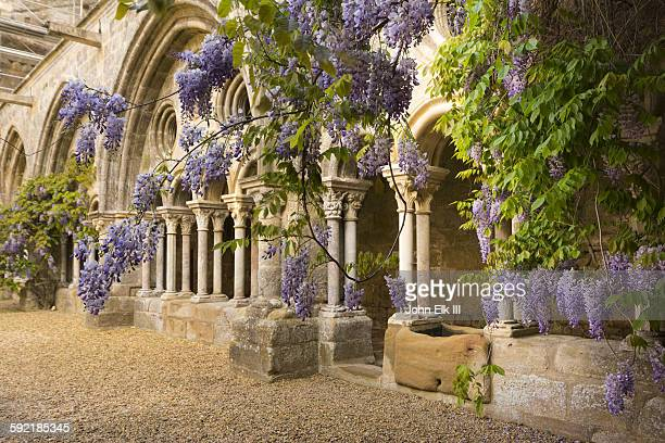fontfroide abbey, cloister with wisteria - languedoc rousillon stock pictures, royalty-free photos & images