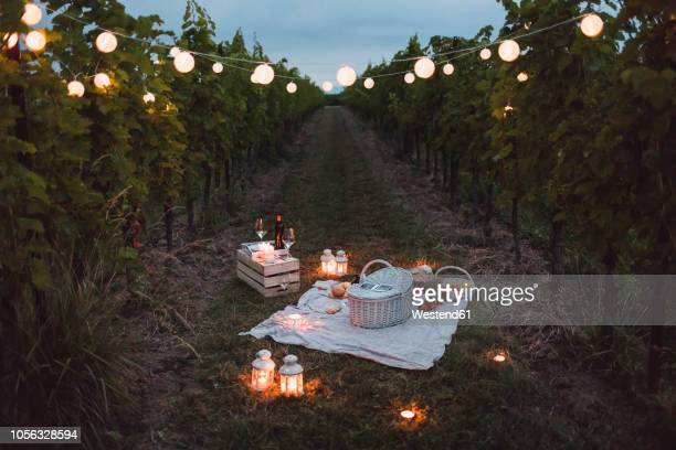 food and light arranged in vineyard for a picnic at night - picknick stock-fotos und bilder