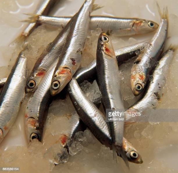 Food fish anchovies