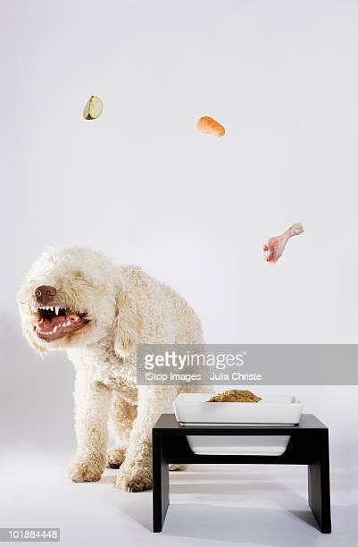 Food floating above a Portuguese Waterdog