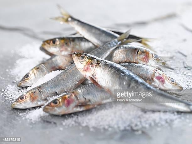 food - sardine foto e immagini stock