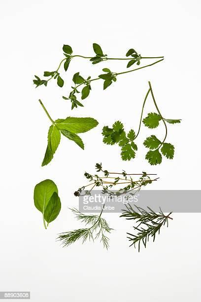 food - erbe aromatiche foto e immagini stock