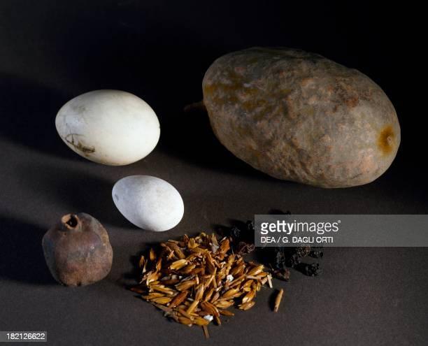 Food remains eggs pumpkin pomegranate and grains Egyptian Civilisation Turin Museo Egizio