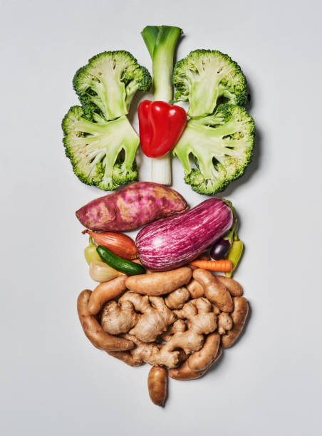 food resembling the human digestive system. - digestion stock pictures, royalty-free photos & images