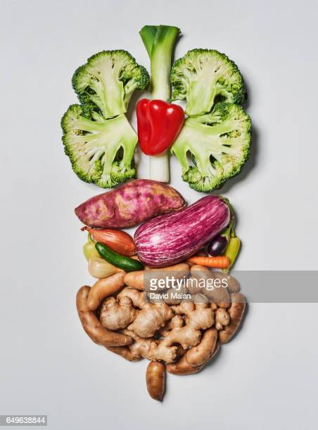 food resembling the human digestive system. - low carb diet stock photos and pictures