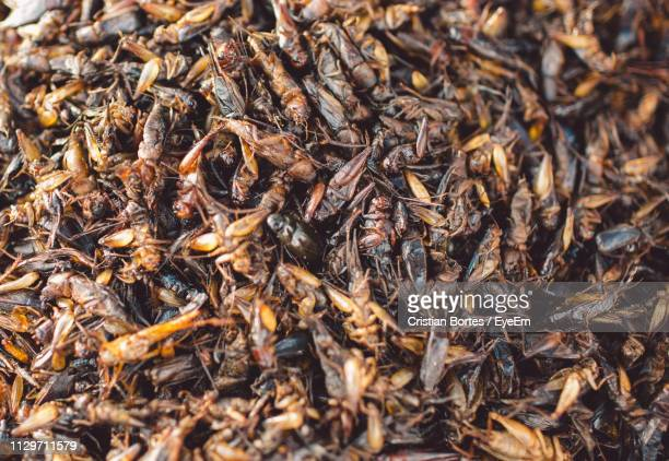 Food Stall Selling Fried Insects
