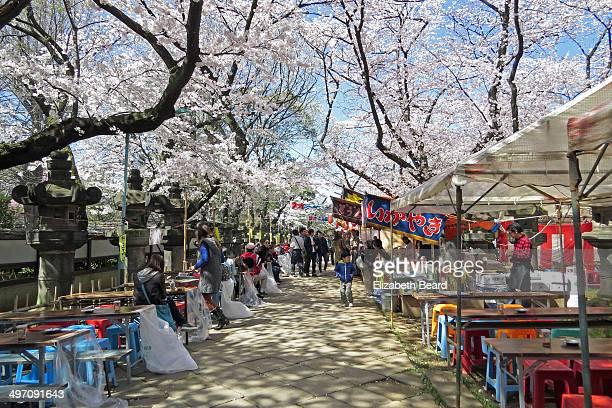Food vendors at Cherry Blossom Festival, Ueno Park, Tokyo