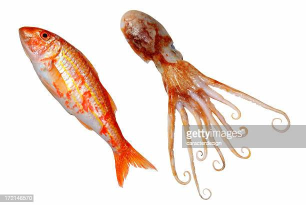 foods: isolated octopussy & red mullet