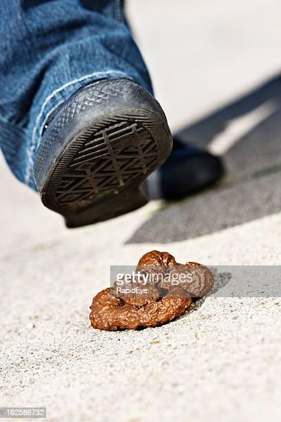 piede aproaching cane droppings'incidente lungo la strada. - cacca foto e immagini stock