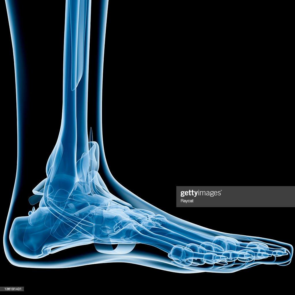 Foot x-ray : Stock Photo