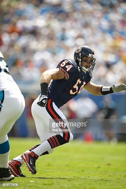Chicago Bears Brian Urlacher in action vs Carolina Panthers. Charlotte, NC 9/14/2008 CREDIT: Bob Rosato