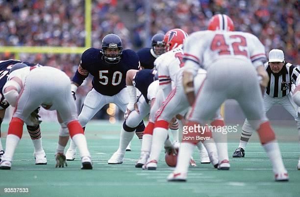 Chicago Bears Mike Singletary in action vs Atlanta Falcons Chicago IL CREDIT John Biever