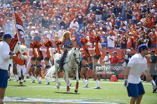 Denver Broncos animal mascot Thinder on field during game vs Kansas City Chiefs at Sports Authority Field at Mile High Denver CO CREDIT David E Klutho